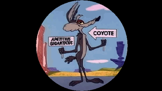 coyote-cartelli